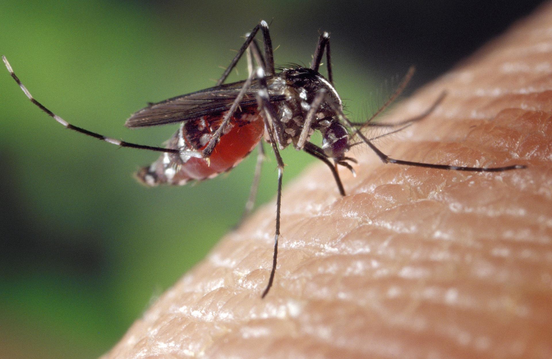 Pozor na komáre!