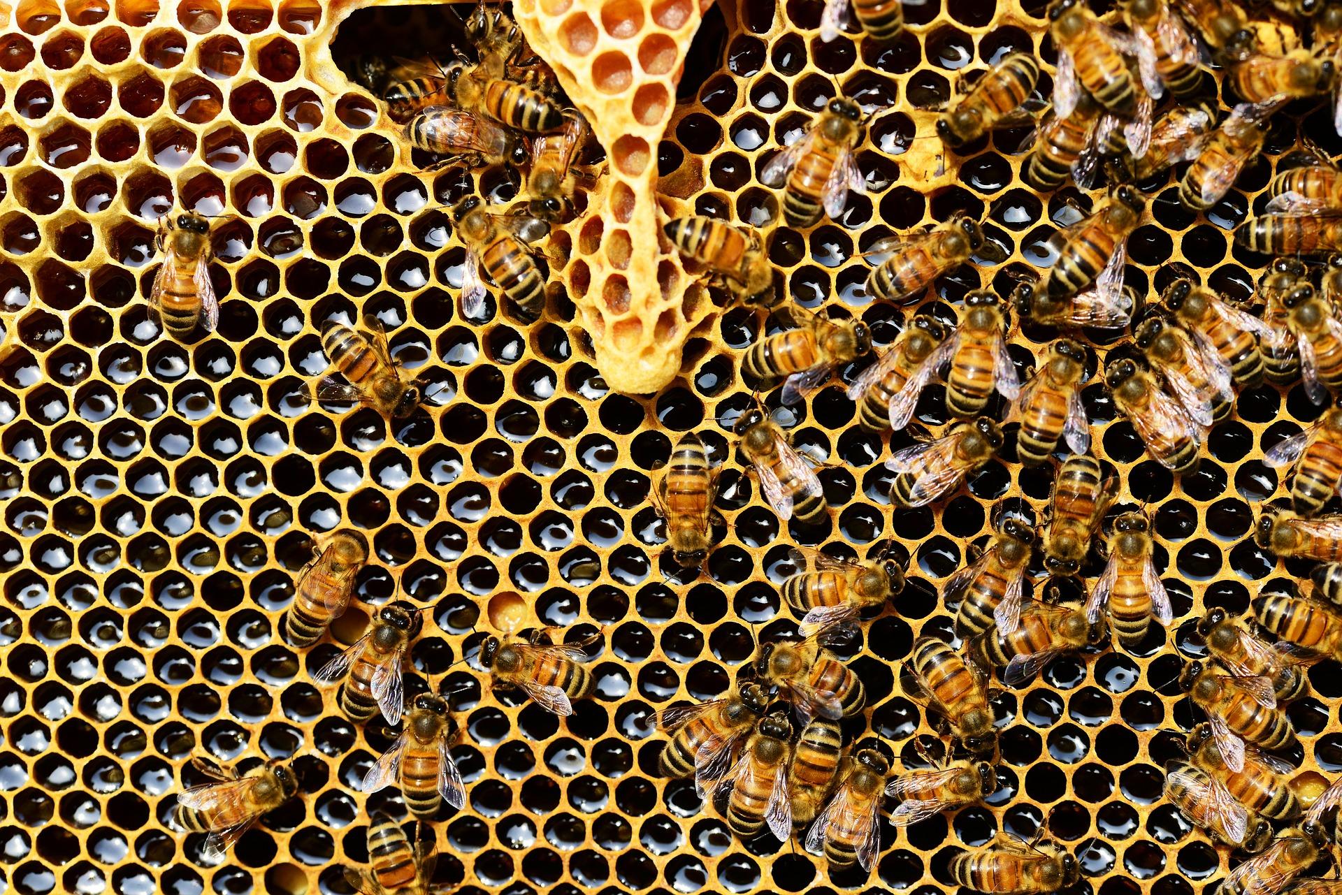 Včely sú všetkým prospešné