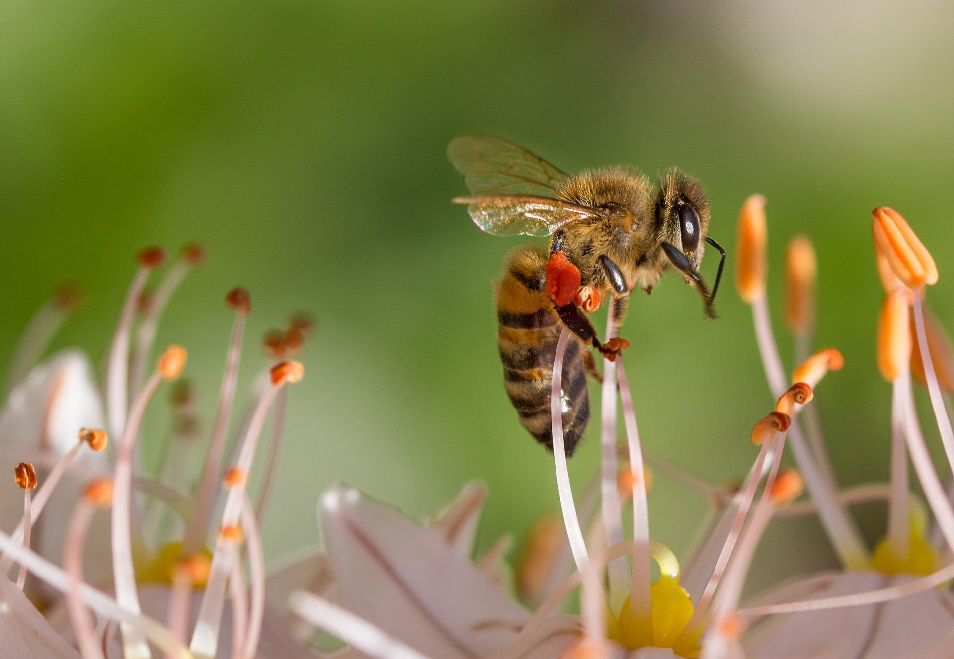 Včela nie je nepriateľ