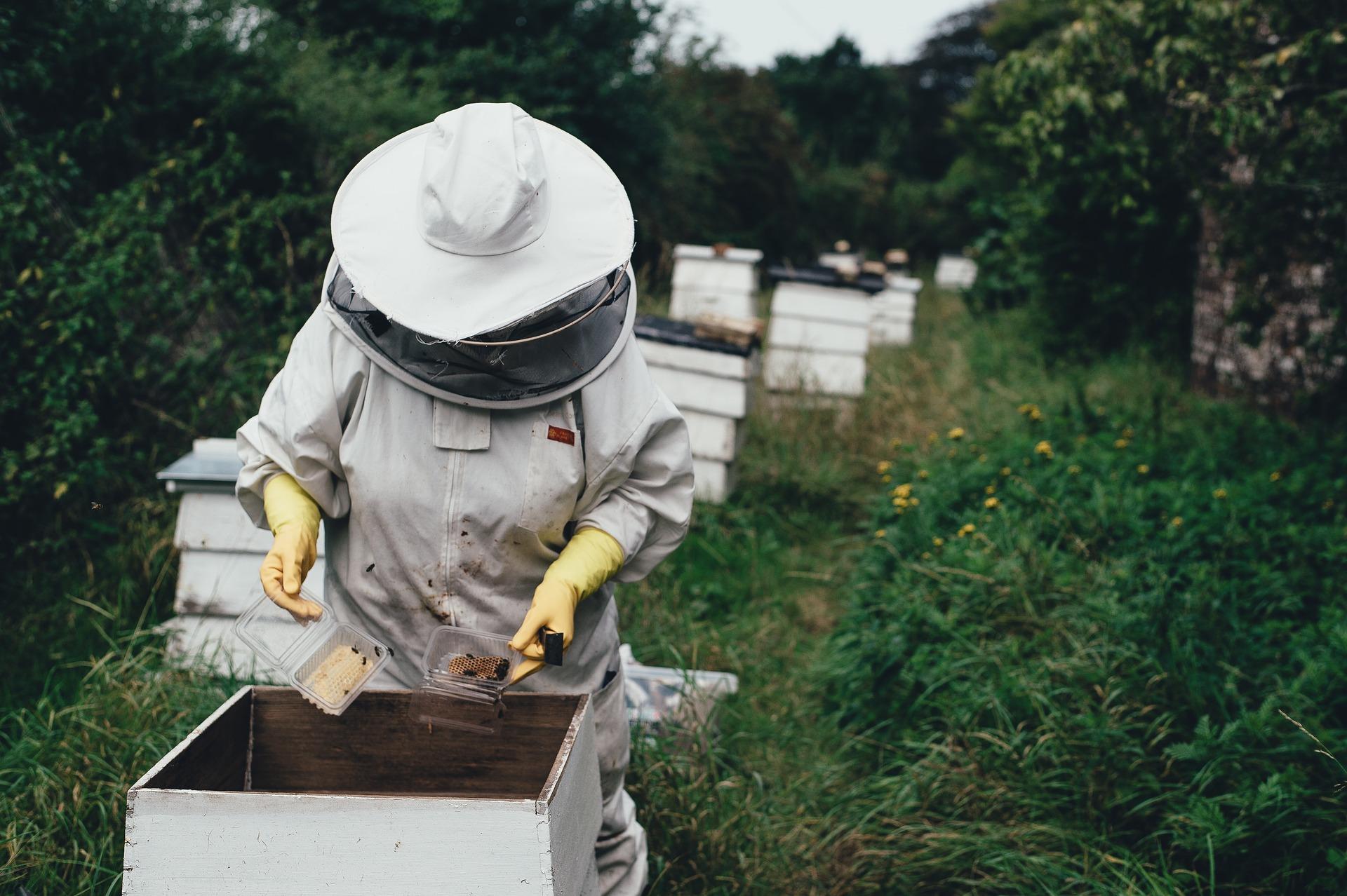 Máte včely vo vašej záhrade?