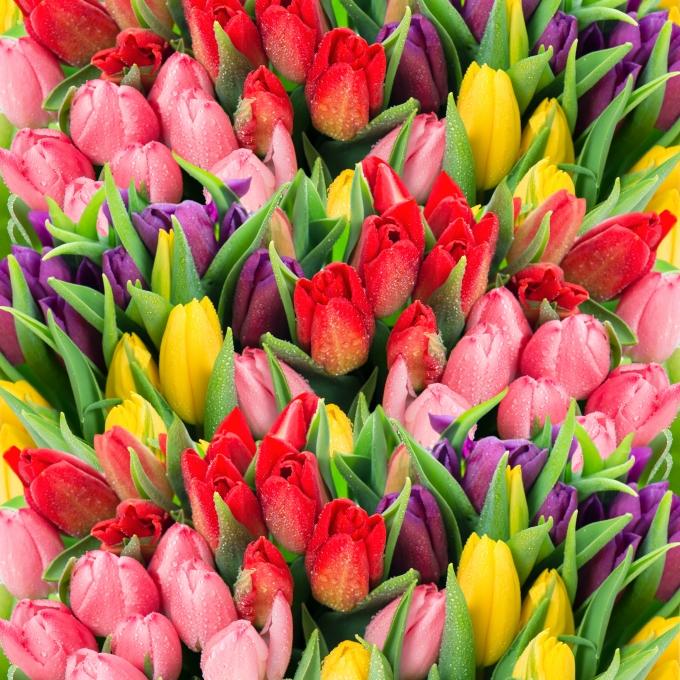 ac583c9b9 Rovnako tak ako má každá farba u kvetín svoj význam, tak aj kvety majú svoj  význam: